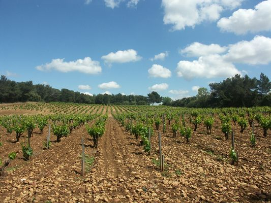 VIGNOBLE CHATEAUNEUF 2
