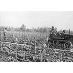 Travaux dans les vignes